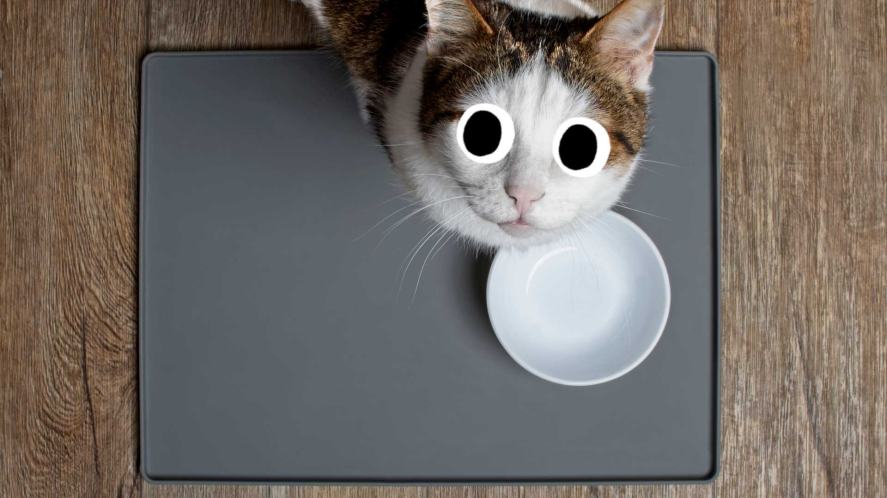 Cat with an empty bowl