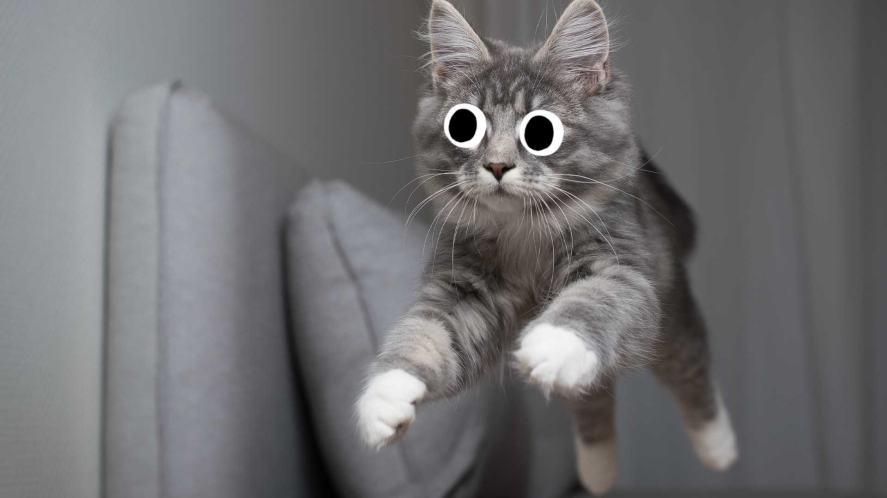 A cat jumping off a sofa