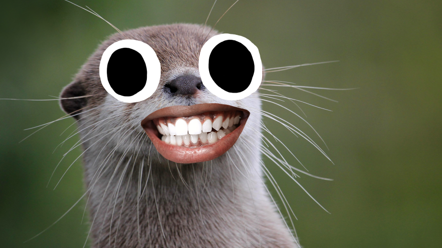 Otter with goofy face