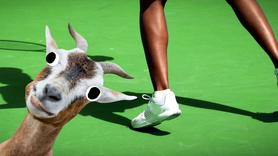 Woman's feet playing tennis with derpy goat