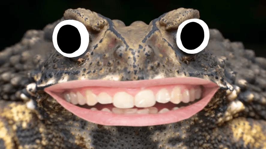 A pet toad