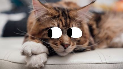 Cat with googly eyes