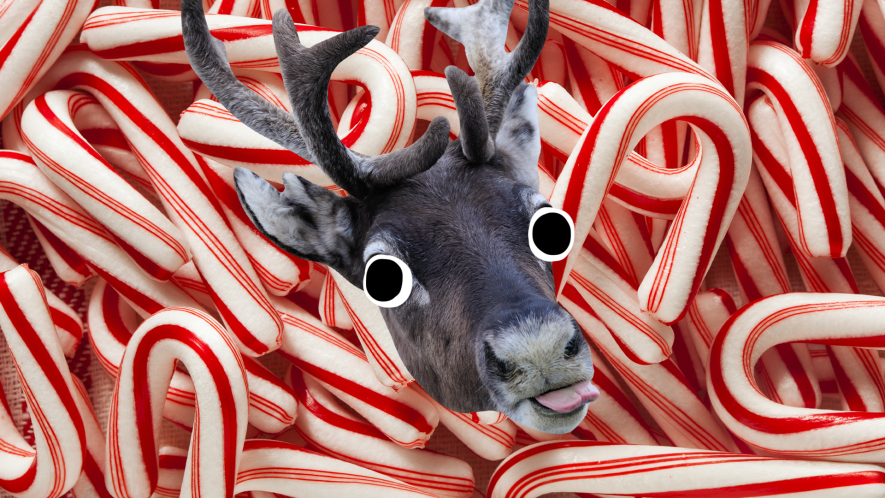 Candy cane background with derpy reindeer face