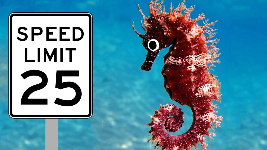 A seahorse moving past a speed limit sign