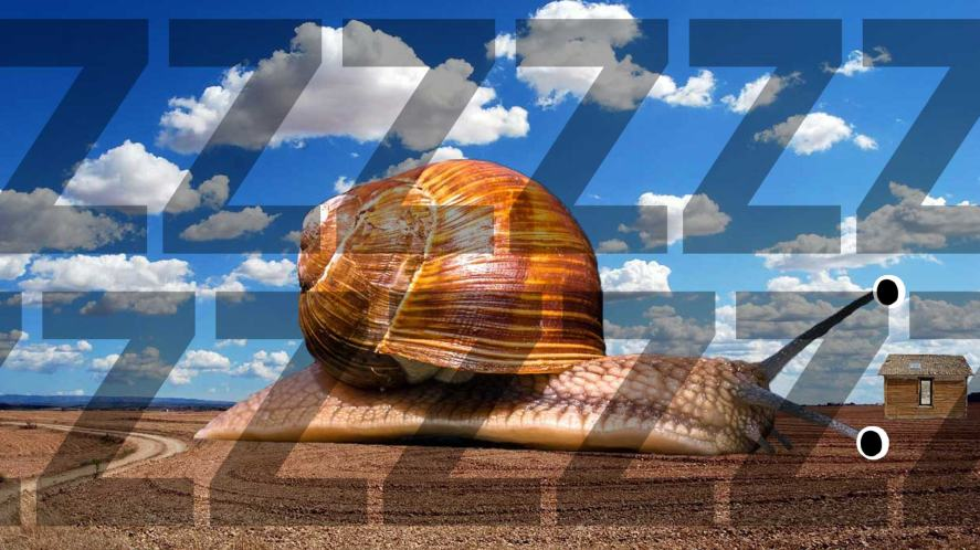 A sleepy snail