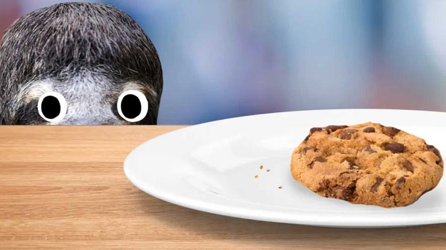 A sloth looks at a biscuit on a plate