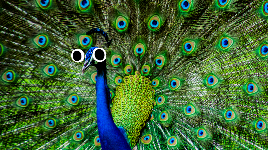Peacock with googly eyes