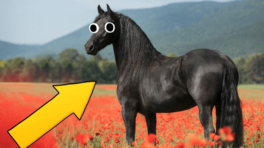 Horse in poppy field with arrow