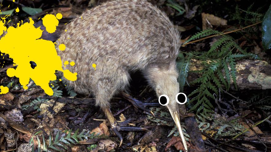 Kiwi bird with googly eyes and splat