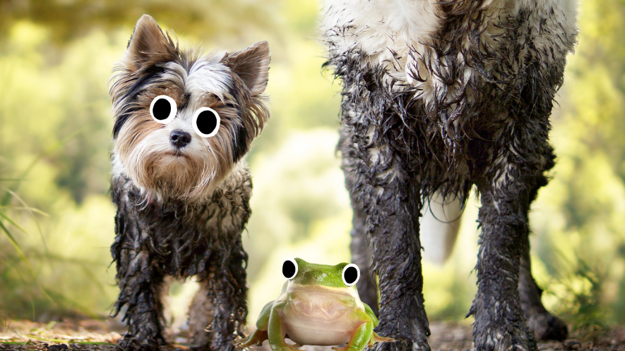 Two muddy dogs and a derpy frog