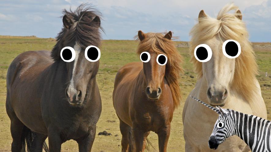 Three horses and Beano zebra