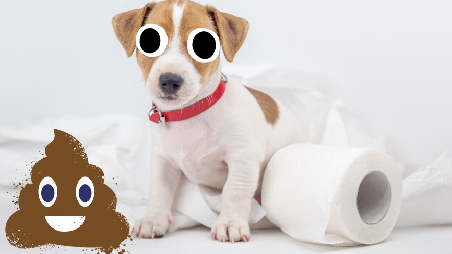 Puppy with loo roll and a poop emoji