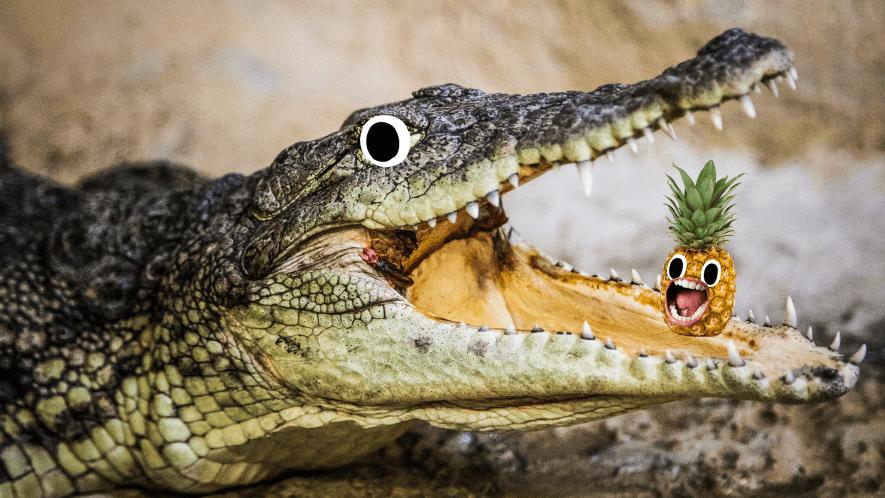 Crocodile with screaming pineapple