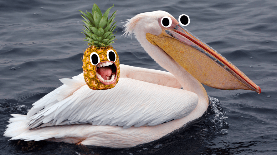 Pelican with a screaming pineapple on its back