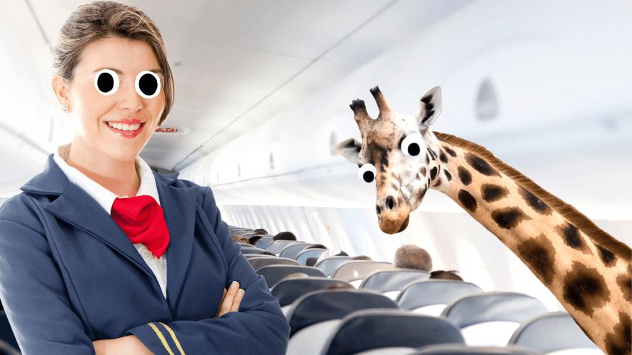 Air hostess on plan with derpy giraffe
