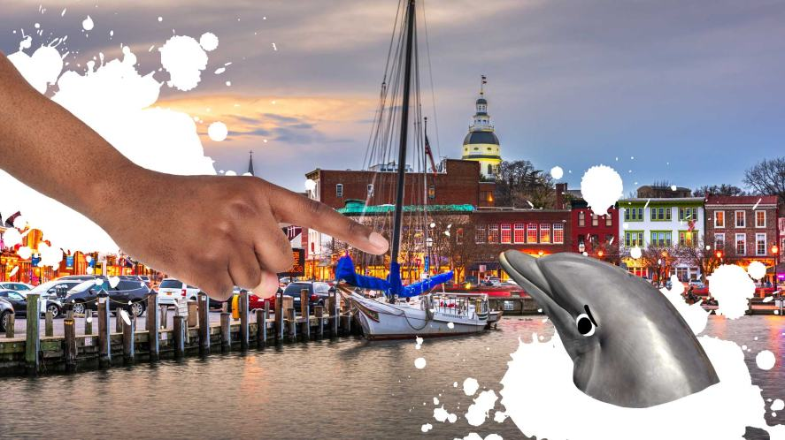 A dolphin visits the capital city of Maryland