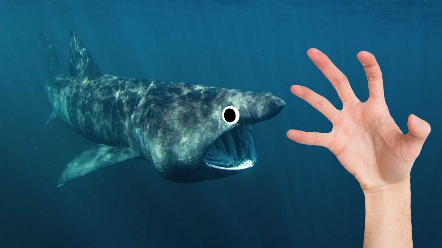 A shark roaming the deep waters