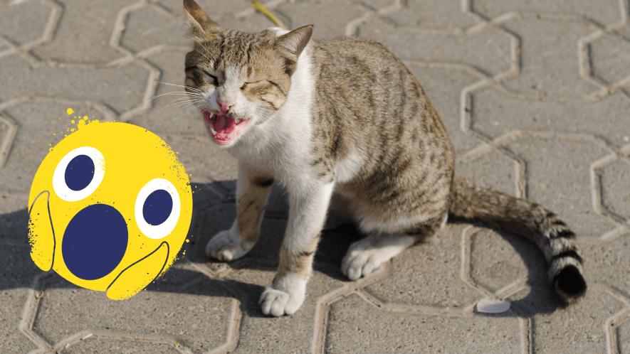 Yowling cat with shocked emoji