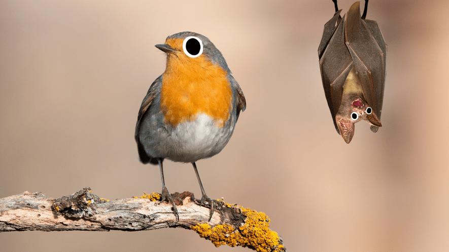 Robin with googly eyes and Beano bat