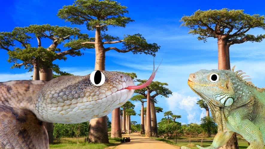 Madagascar scene with Beano snake and iguana