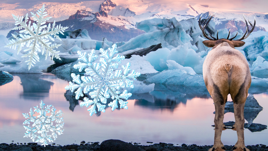 Iceland with snowflakes and reindeer bum