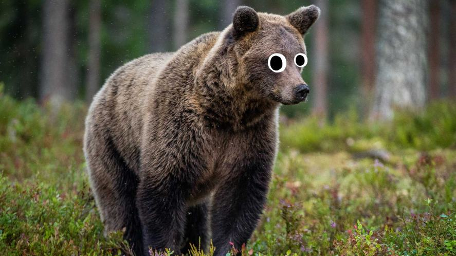 A bear walking around in a forest