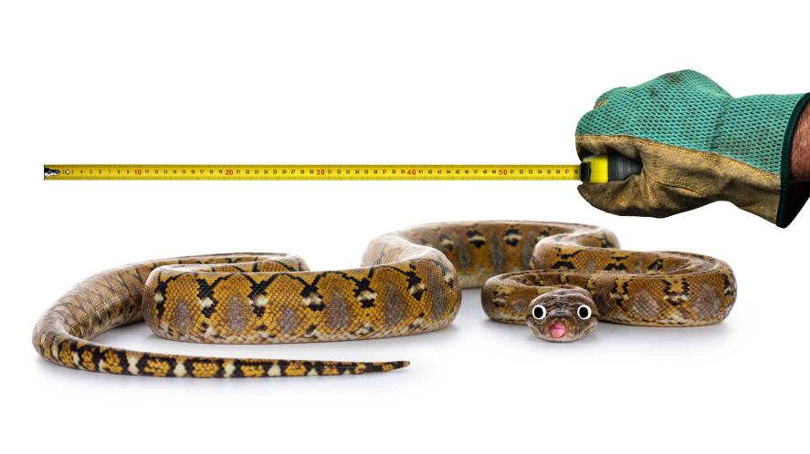 A reticulated python being measured with a tape measure