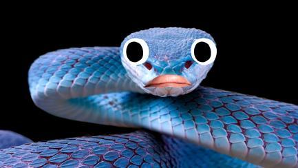A blue snake