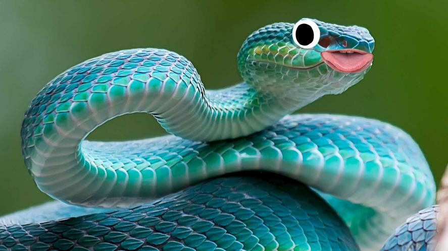 A coiled snake