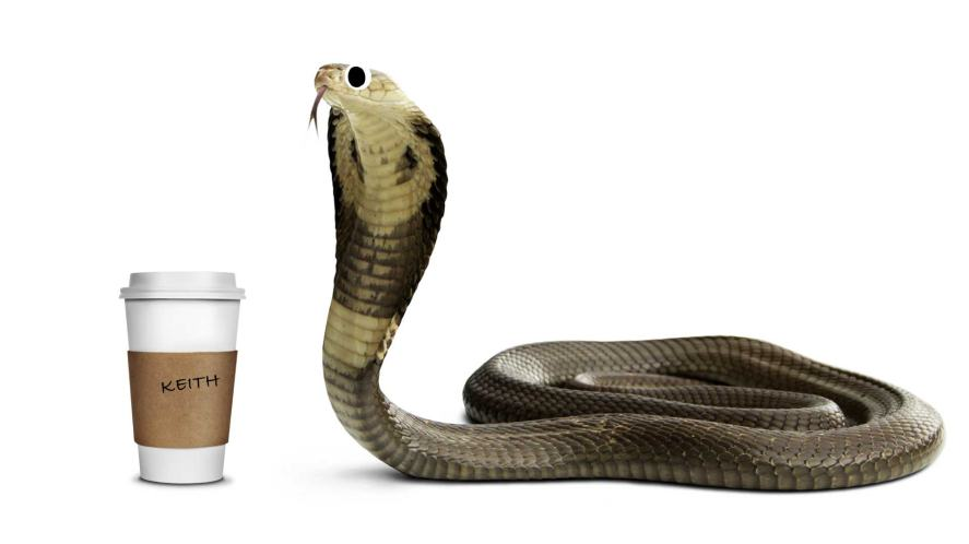 A snake with a cup of coffee