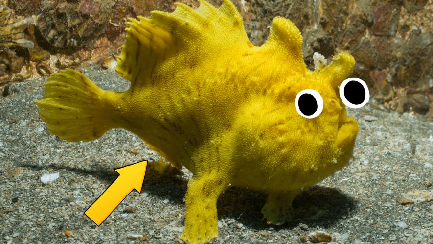 Weird looking fish with arrow