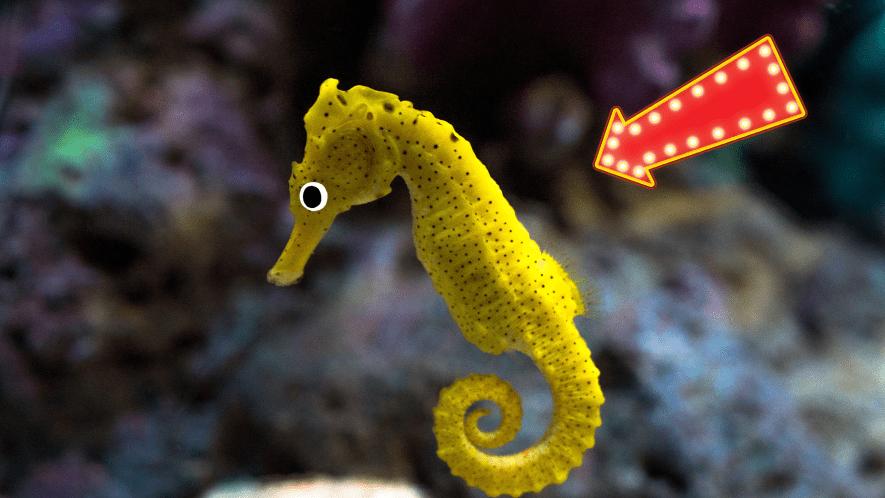 Seahorse with arrow