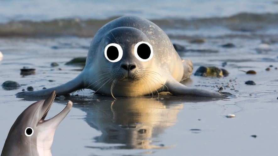 Seal with derpy dolphin
