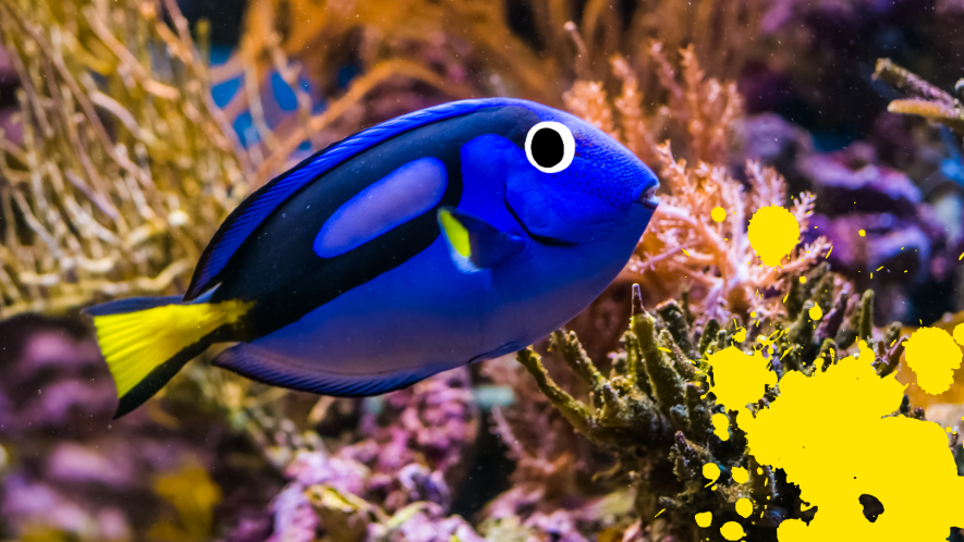 Fish with coral and yellow splats