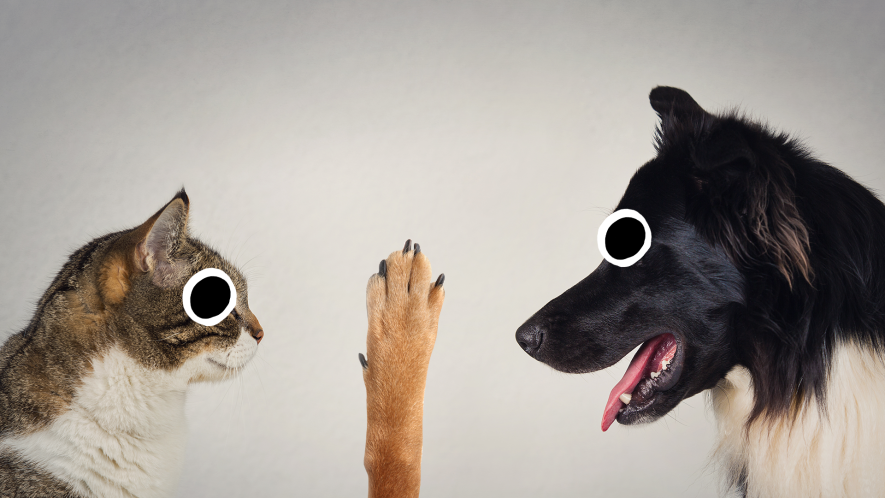 Cat and dog staring at each other with paw in the middle on white background