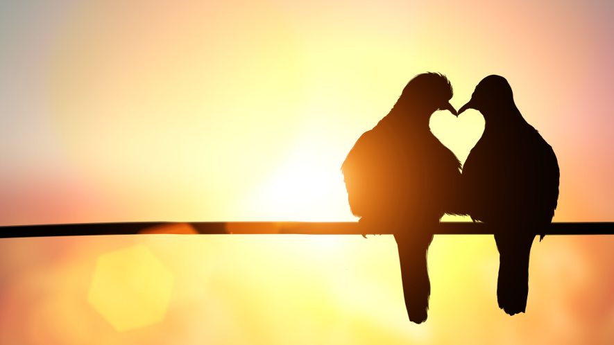 Two birds on a branch kissing at sunset