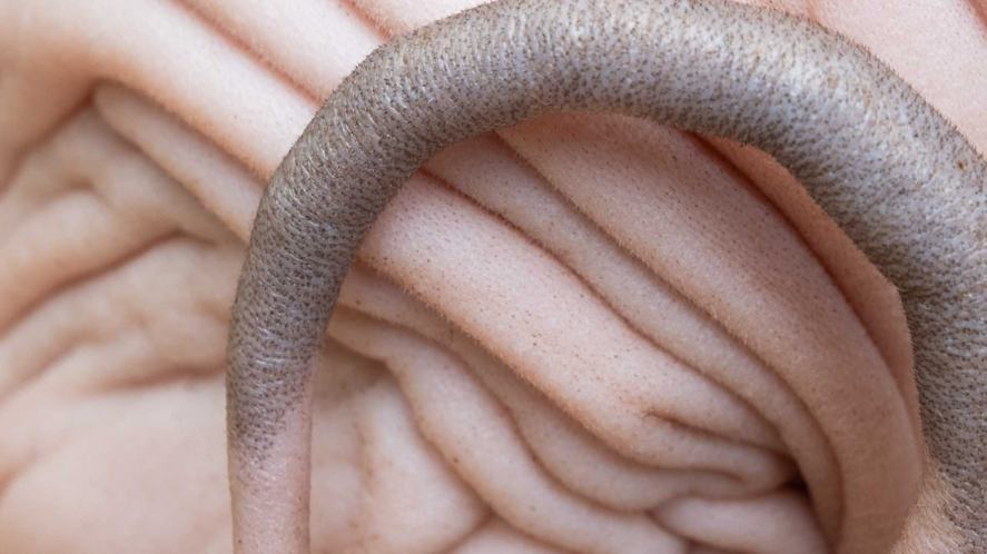 A close up of an animal's back and tail
