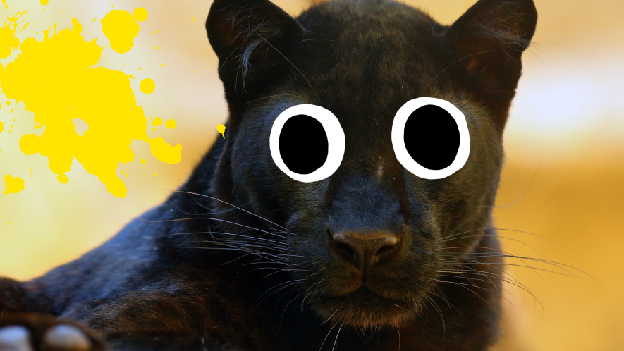 Panther with yellow splat