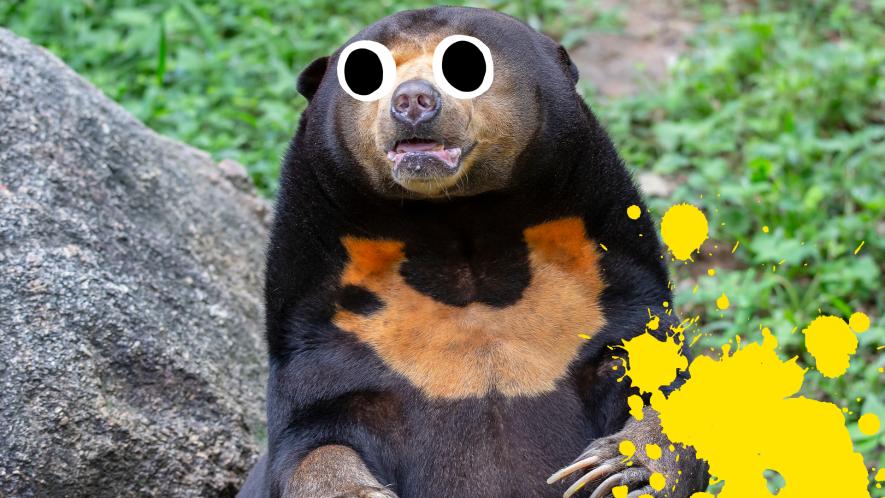 Sun bear with splat