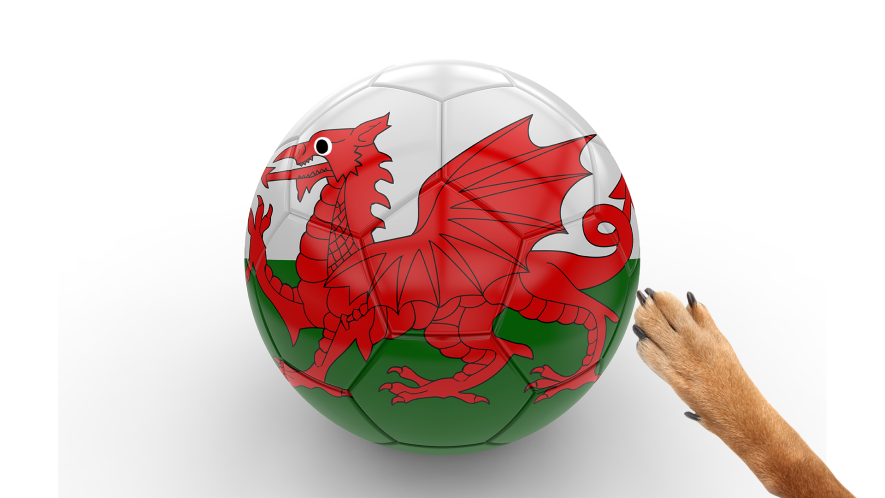 Football with Welsh flag and dog paw on white background