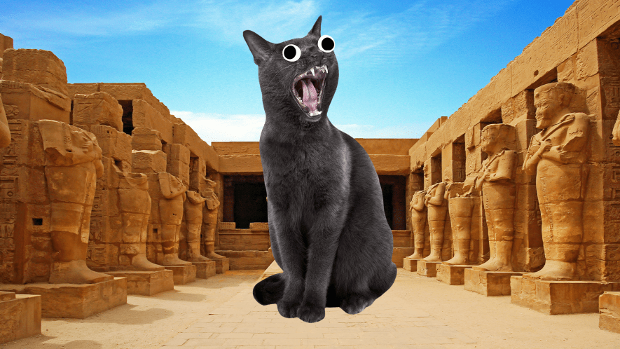 Screaming cat and ancient Egyptian ruins