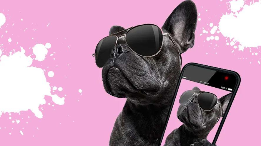 A dog taking a selfie