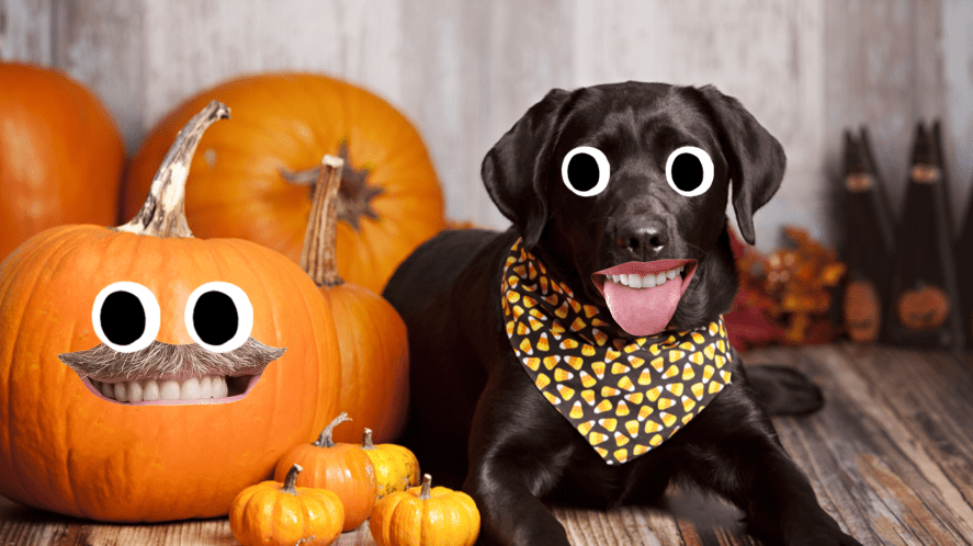 A dog celebrating Halloween with a selection of pumpkins