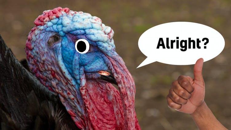 A turkey's face
