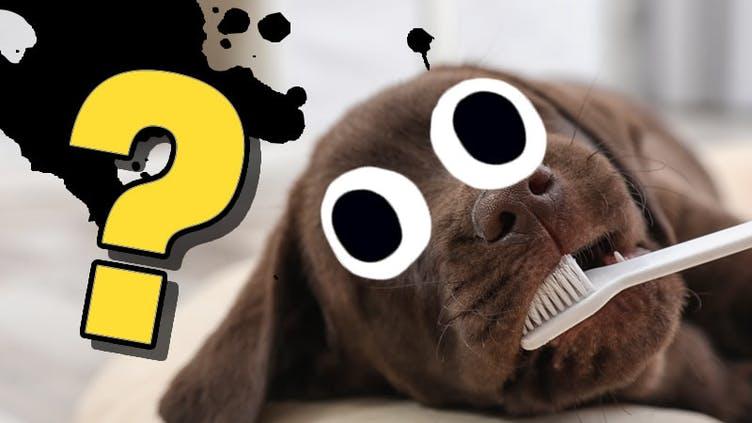 A dog brushing its teeth