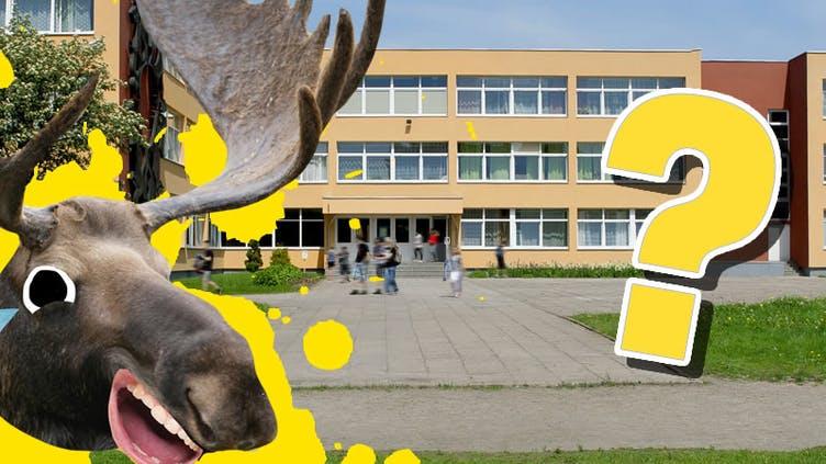 A moose outside of a big school
