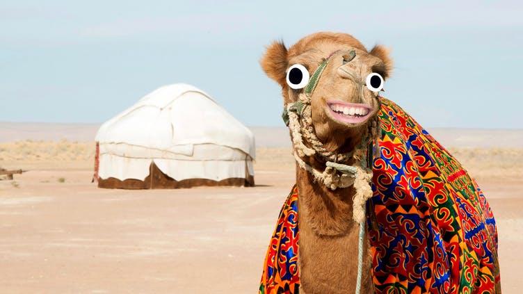 A camel next to a tent