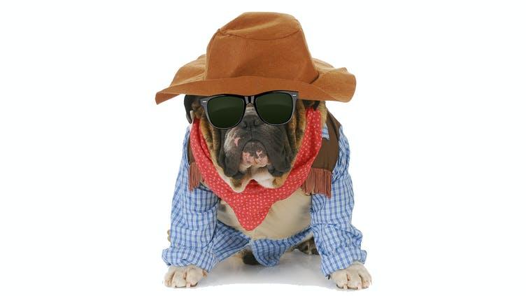 A dog dressed as a cowboy