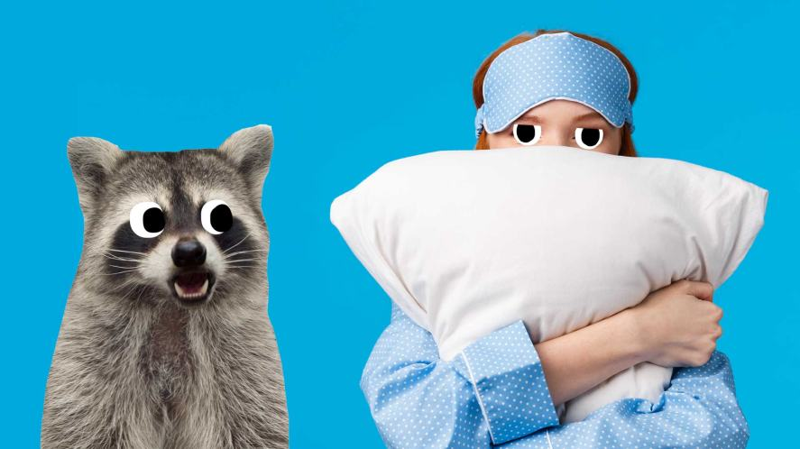 A person clutching a pillow, standing next to a raccoon