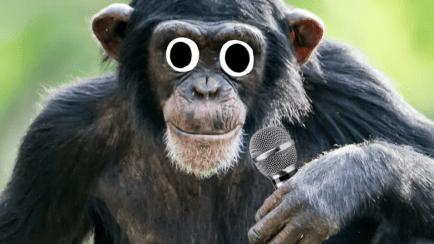 A chimp with a microphone